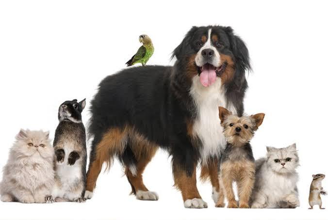 Entenda porque os animais não transmitem COVID-19