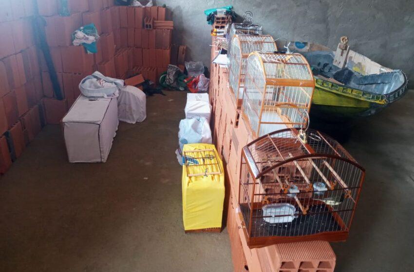 Ação da 22ª CIPM flagra comercialização de animais silvestres em Simões Filho